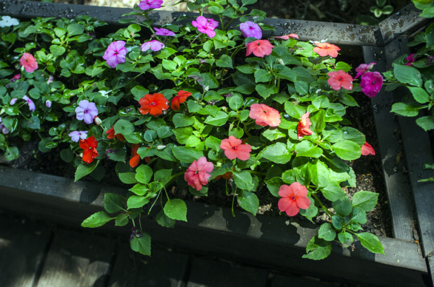 The Garden Flourishes —