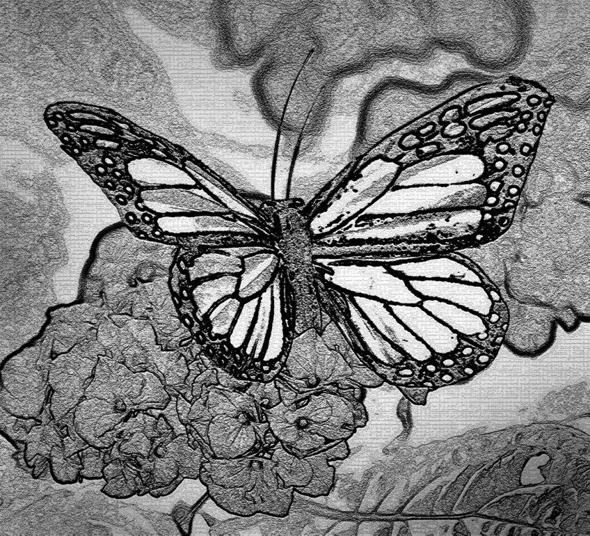 Butterfly —