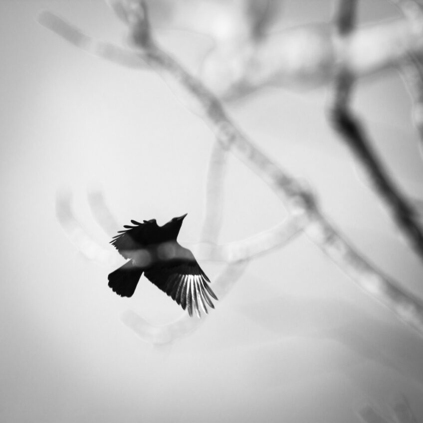 Free Again —